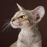 Мама-кошка Cleopatra