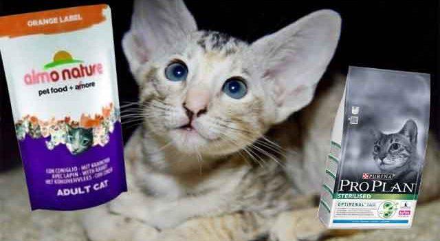 Плюсы в пользу выбора стерилизации домашних кошек и котов