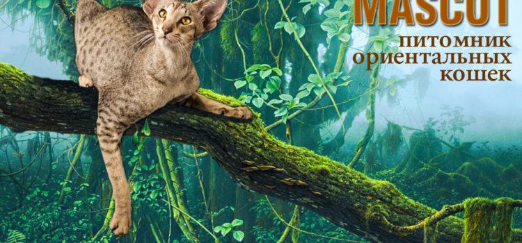 Выберите для себя и любимых ориентального котёнка